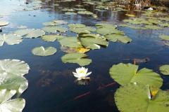 blooming_49133654132_o